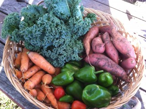 Garden Veggies ~ from Me & My House